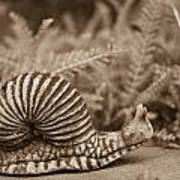 Ancient Snail Art Print