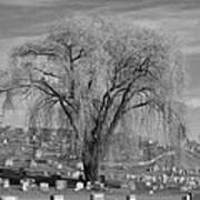 And The Willow Tree Weeps Art Print