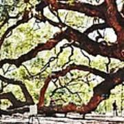 Angel Oak Tree 2 Art Print