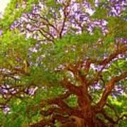 Angel Oak Tree1 Art Print