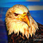 Angel The Bald Eagle Art Print