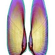 Angel Wing Shell, X-ray Art Print