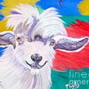Angora Sweetie Art Print