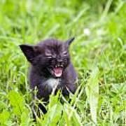 Angry Kitten Art Print