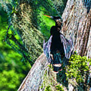 Anhinga On A Cyprus Art Print by Frank Feliciano