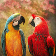 Animal - Parrot - We'll Always Have Parrots Art Print
