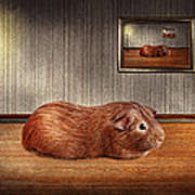 Animal - The Guinea Pig Art Print by Mike Savad