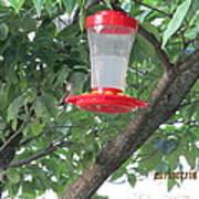 Another Hummingbird Art Print
