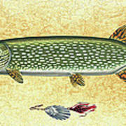 Antique Lure And Pike Art Print by JQ Licensing