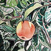 Apple Tree Sketchbook Project Down My Street Art Print