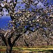 Apple Trees In An Orchard, County Art Print