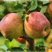 Apples Painterly Art Print