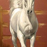 Arab Stallion Art Print