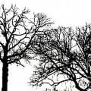 Arboreal Mind Meld Art Print