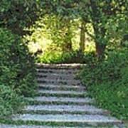 Arboretum Steps Art Print
