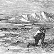 Arctic: Bear Hunting, 1871 Art Print