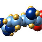 Arginine, Molecular Model Art Print