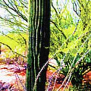 Arizona Catcus Art Print