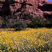 Arizona Flower Field Art Print by Barry Shaffer