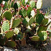 Arizona Prickly Pear Cactus Art Print
