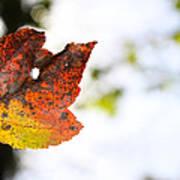 Artsy-fartsy Autumn I Art Print