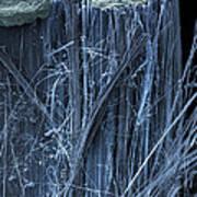 Asbestos, Sem Art Print