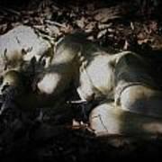 Asleep In The Leaves Art Print