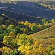 Aspen Bluffs In Autumn Colors Art Print