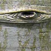 Aspen Eye Art Print