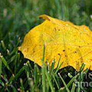 Aspen Leaf Art Print
