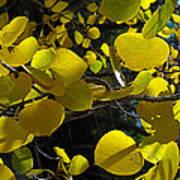 Aspen Leaves 1 Art Print