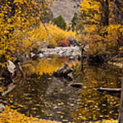 Aspen Leaves On Stream Art Print