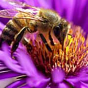 Aster Bee Art Print
