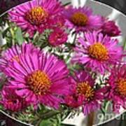 Aster Named September Ruby Art Print