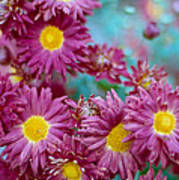 Asters Print by Marcio Faustino