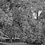 Audubon Park 2 Monochrome Art Print