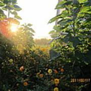 August Sunrise In The Garden Art Print