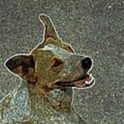 Australian Cattle Dog Mix Art Print