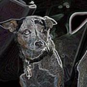 Australian Cattle Dog Sheltie Mix Art Print