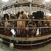 Automatic Milking Machine Print by Photostock-israel