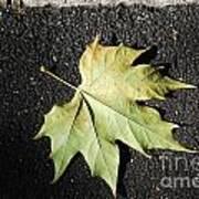 Autumn 10 Art Print by Elena Mussi
