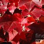 Autumn 11 Art Print by Elena Mussi