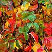 Autumn 3 Art Print by Elena Mussi