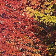 Autumn Arrival Art Print