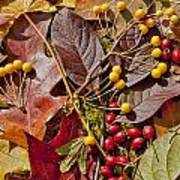 Autumn Berries And Leaves Background  Art Print