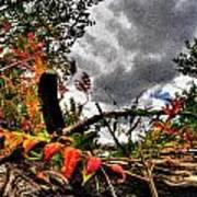 Autumn Breeze Through The Trees    Alt Art Print