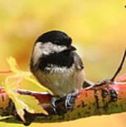 Autumn Chickadee Art Print