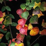 Autumn Color Art Print by Brenda Bryant