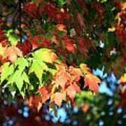 Autumn Color Medley Art Print
