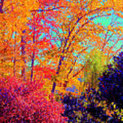 Autumn Colors 13 Art Print
